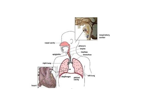 Causes Of Shortness Of Breath